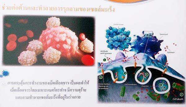 anti cancer betaglucan-maho