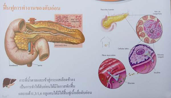 betaglucan-maho restore pancreas