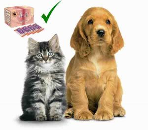 cat and dog used betaglucan-maho