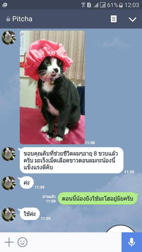 leukemia1 cat 8 year